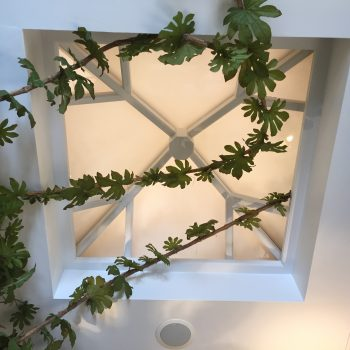 Wooden Timber Roof Lantern Bicester Village skylight